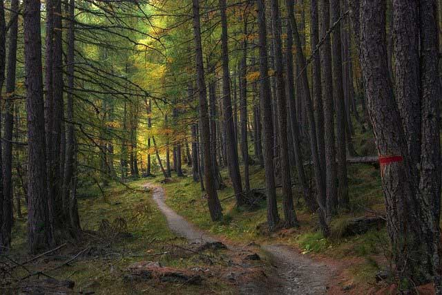 Como Organizar um Passeio à Floresta