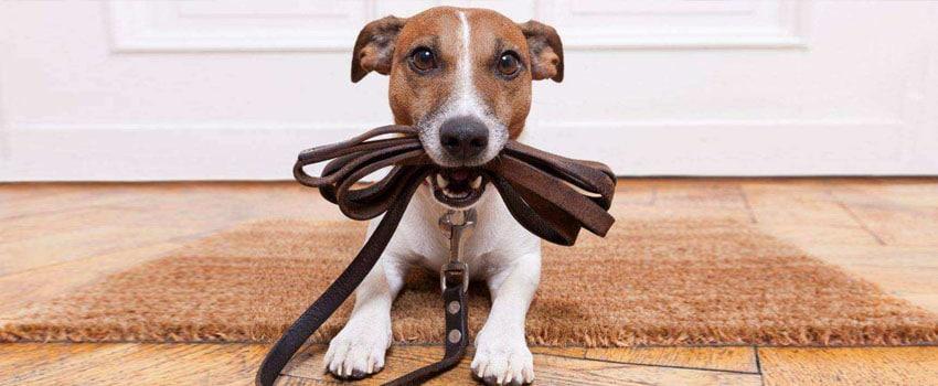 Curso de Adestramento de Cães