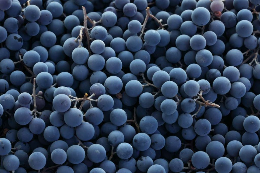Glossário do vinho