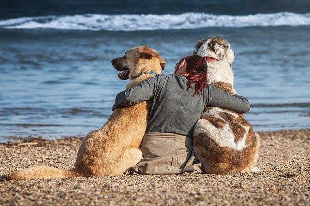 Para o cão, nós somos cachorros