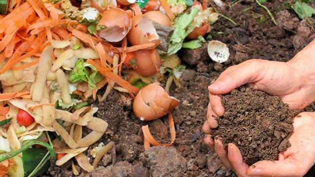 Como aproveitar melhor os resíduos orgânicos